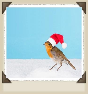 圣诞节 Birdy
