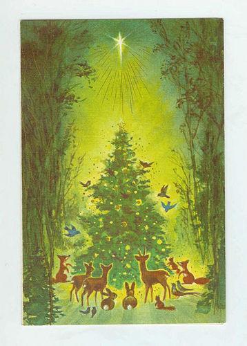 natal pohon (Christmas 2008)