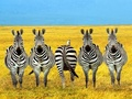 Dare To Be Different - wild-animals photo
