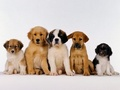 Five Cuties