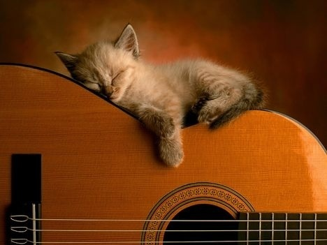 Musical Kitty