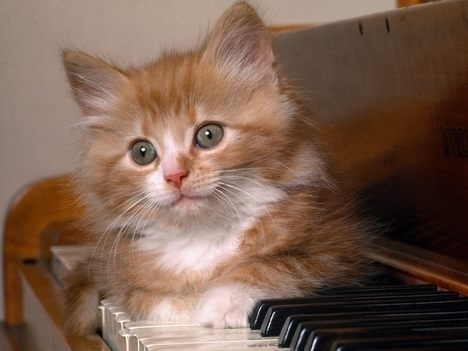 piano Kitty