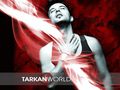 Tarkan - tarkan wallpaper