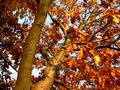 The Falling Leaves - photography photo
