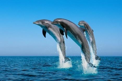 Water Trio