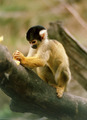 cute monkey - monkeys photo