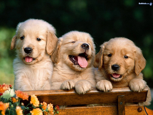 happy-puppies-i-love-animals-2824533-500