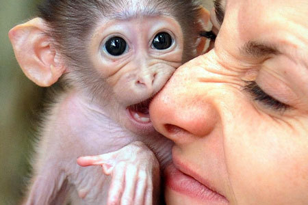 monkey biting someone's nose - Monkeys Photo (2816914) - Fanpop