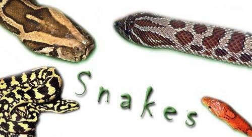 snakes!!!!!!!!!!!