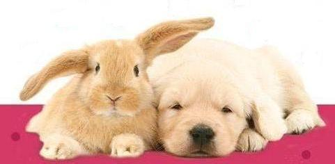 Animals wallpaper called Bunny and dog