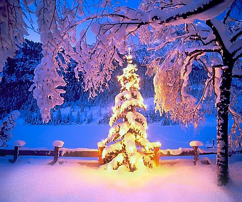 크리스마스 나무, 트리
