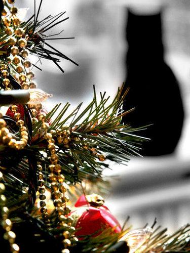 natal árvore