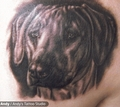 Dog - tattoos photo