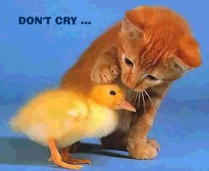 Animals wallpaper called Don't cry