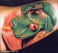 Frogs - tattoos photo