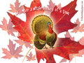 Happy Thanksgiving!  2008 - thanksgiving wallpaper
