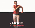 Jake Gyllenhaal - hottest-actors wallpaper