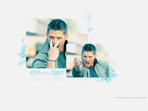 Jensen Eye Of The Tiger