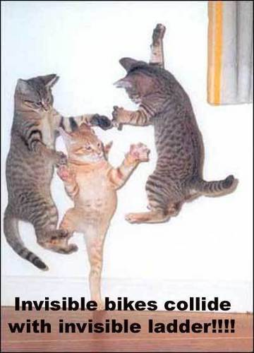 lol gatos