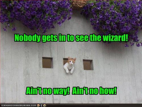LOL 고양이