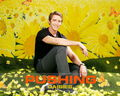 Pushing Daisies - pushing-daisies wallpaper