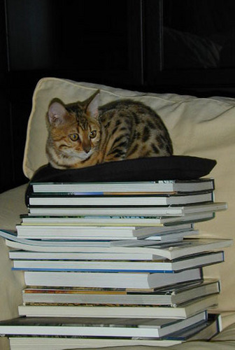 Stack of libri with a Kitty