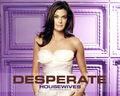 desperate-housewives - Susan wallpaper