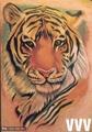 Tiger - tattoos photo