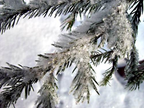 White Weihnachten (2008)