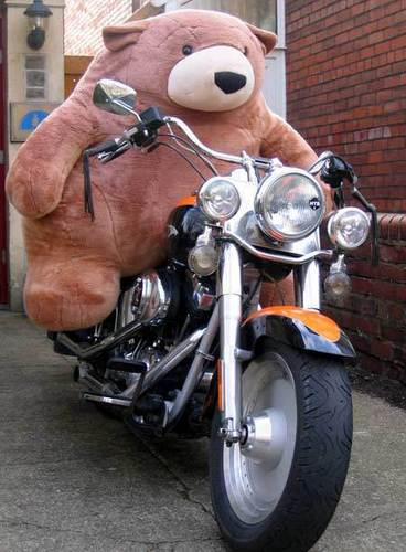 teddy on motorcicle!
