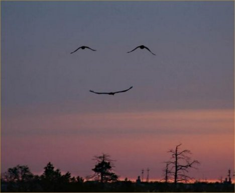 three birds making a smiley!