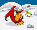 A funny snowball fight - club-penguin wallpaper