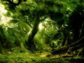 Fangorn - lord-of-the-rings wallpaper