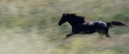Horses Images Flicka Wallpaper And Background Photos 3015400