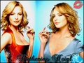 Katherine Heigl - katherine-heigl wallpaper