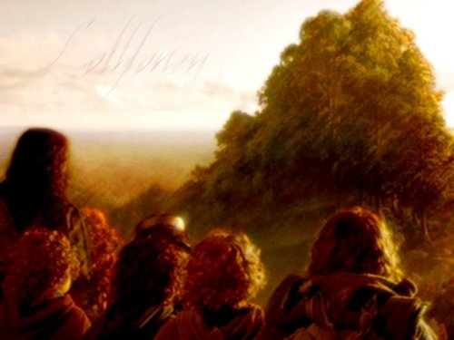 el señor de los anillos fondo de pantalla possibly with a sunset entitled Lothlorien