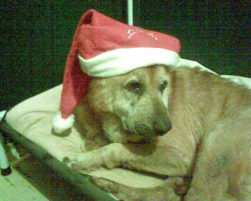 Merry क्रिस्मस From Cutey!