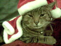 Santa Cat!!!!