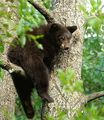 Bear - animal-planet photo