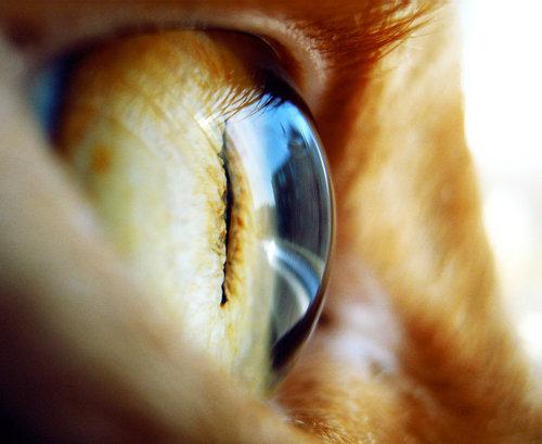 In Your Eyes II
