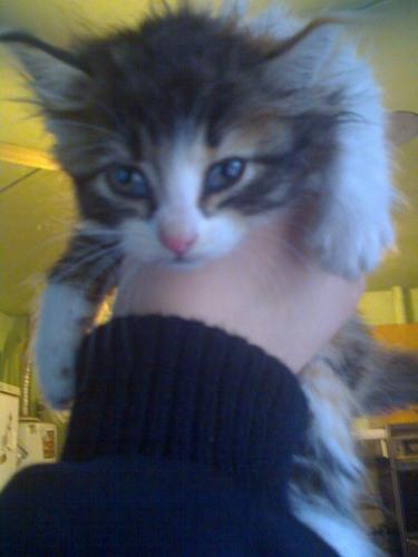 My cat Tony (Moran)