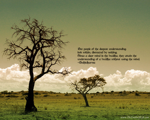 Creativity Wallpaper Containing A Live Oak Beech And Tree Titled Spiritual