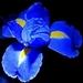 Blue Nature