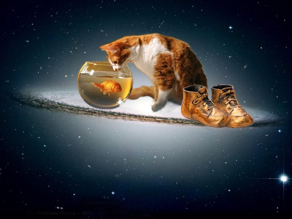 Cat n poisson