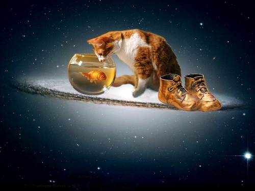 Cat n Fish - domestic-animals Wallpaper