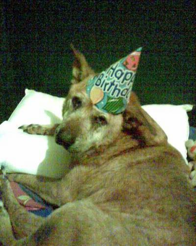 Cutey's 63-years-old today ... in doggie years, lol!