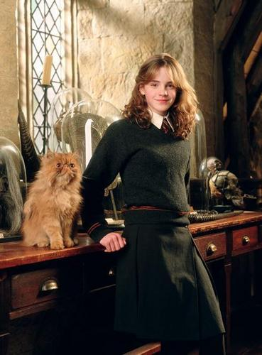Hermione Granger wallpaper possibly containing a persian cat and a kitten called Prisoner of Azkaban