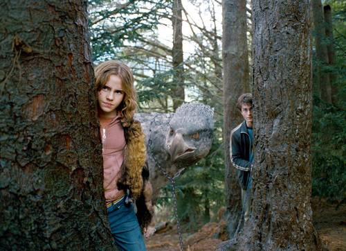 Hermione Granger wallpaper possibly containing a sitka spruce, a mahogany, and an american white birch called Prisoner of Azkaban
