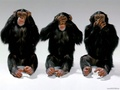 Three Wise Monkeys - wild-animals wallpaper