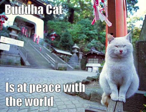 budda cat